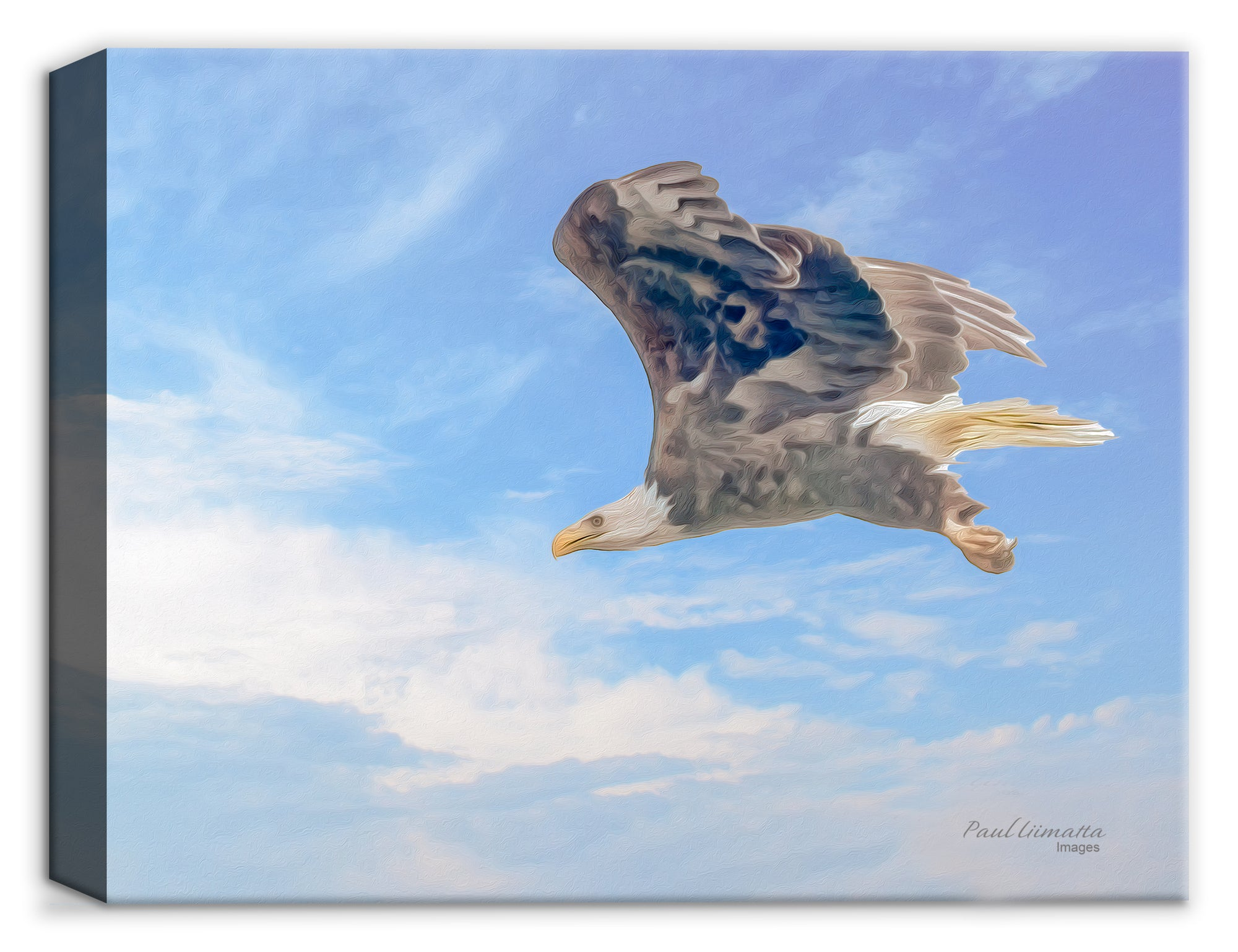 Canvas Print - Soaring Eagle