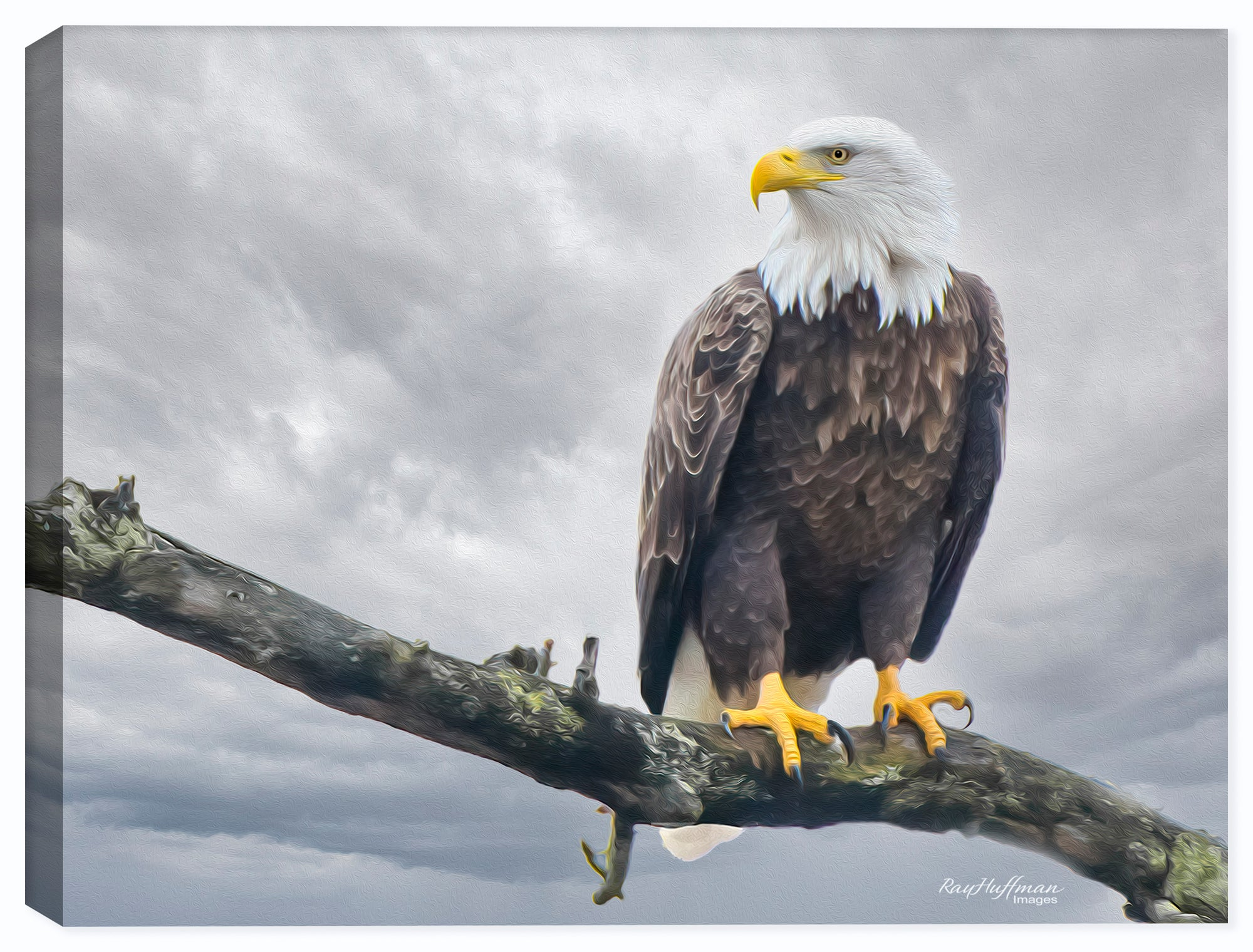 Bald Eagle on a Branch - Painting