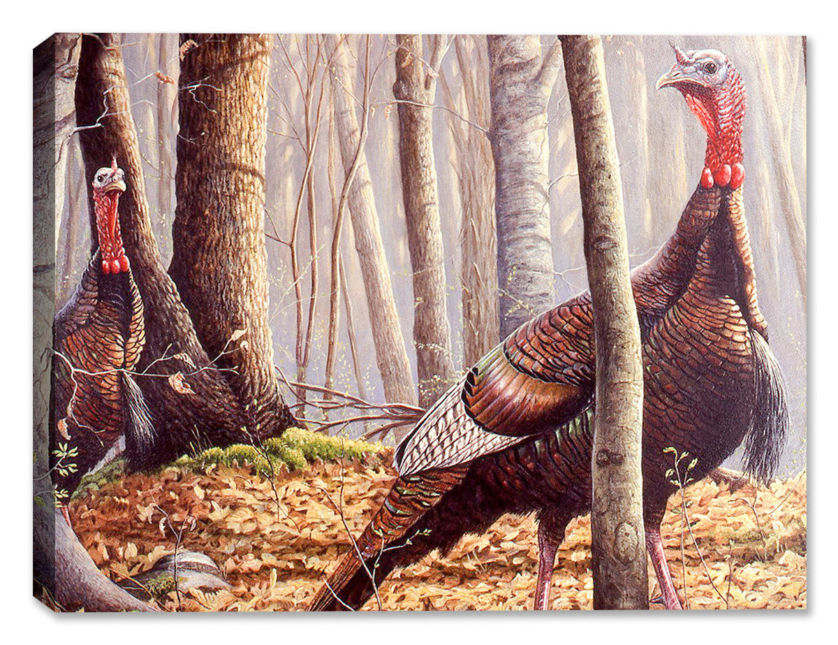 Turkey - First Call by Carol Decker - Canvas Art Plus