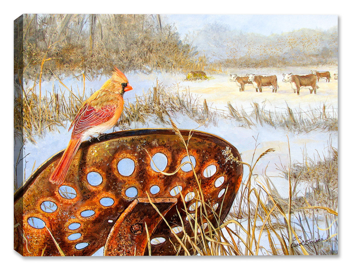 Cardinal - Front Row Seat by Carol Decker - Canvas Art Plus