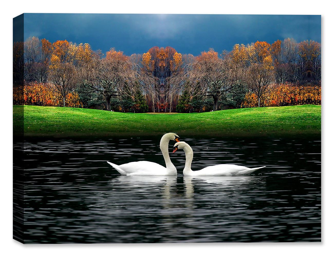 Swans on a Lake - Canvas Art Print