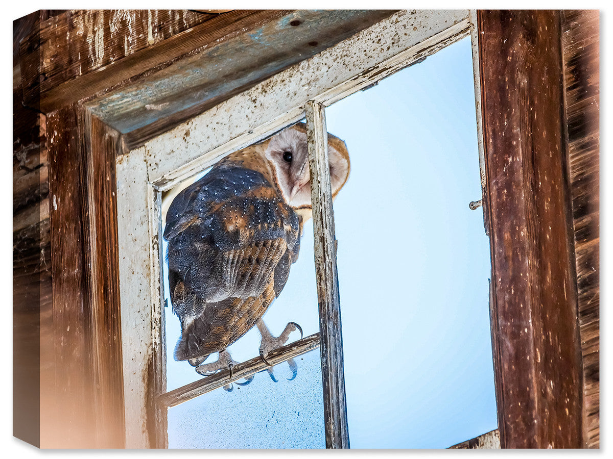Owl Looking into the Barn - Canvas Art Plus