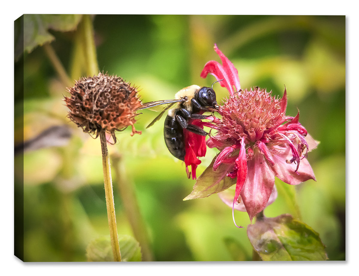 Bee on Flower on Canvas - Canvas Art Plus