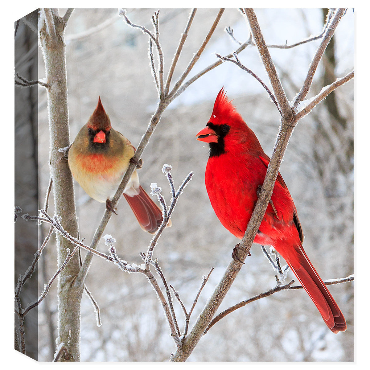 Mr. & Ms. Cardinal - Fine Art Canvas Print - Canvas Art Plus