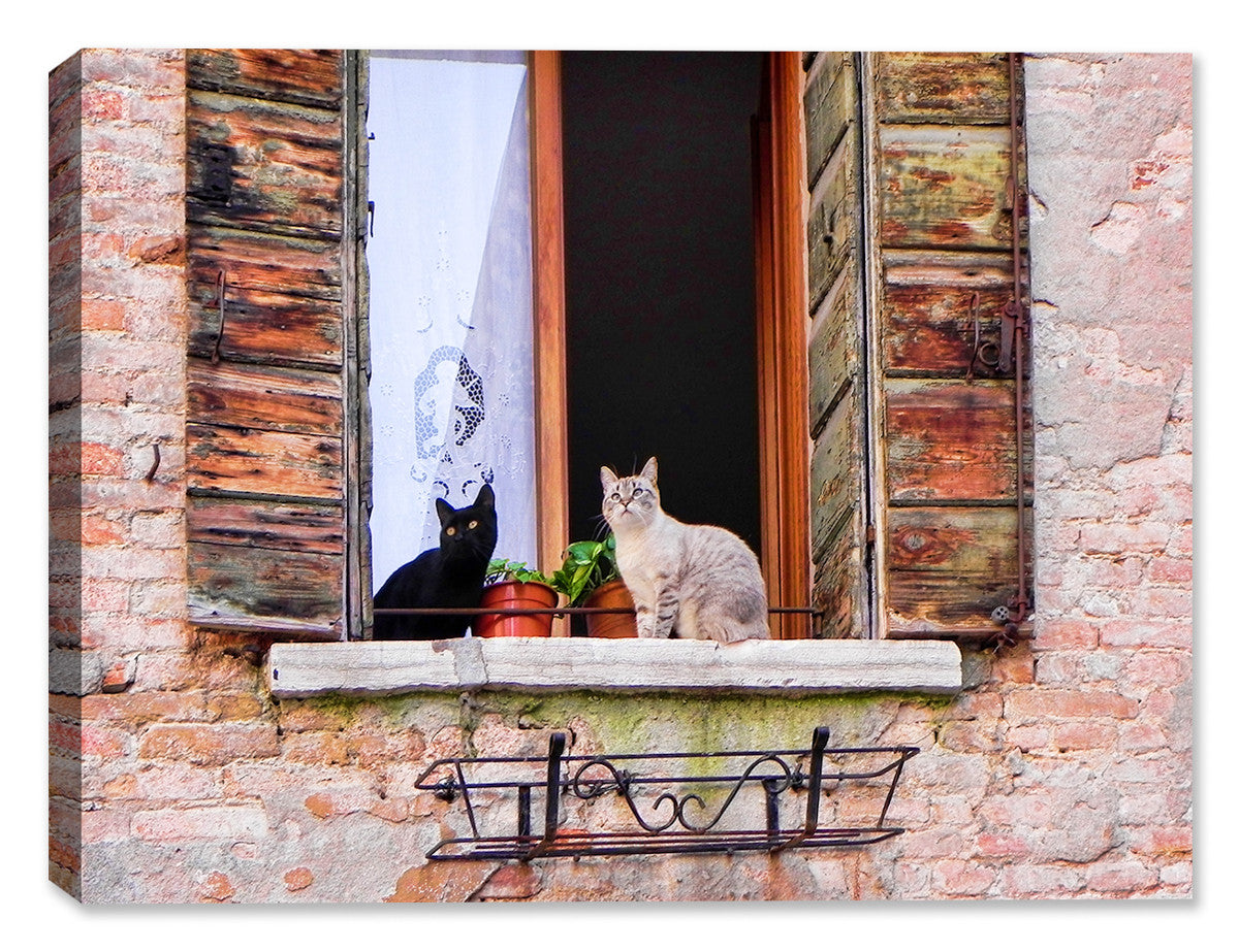 Florence Felines -  Indoor/Outdoor Art