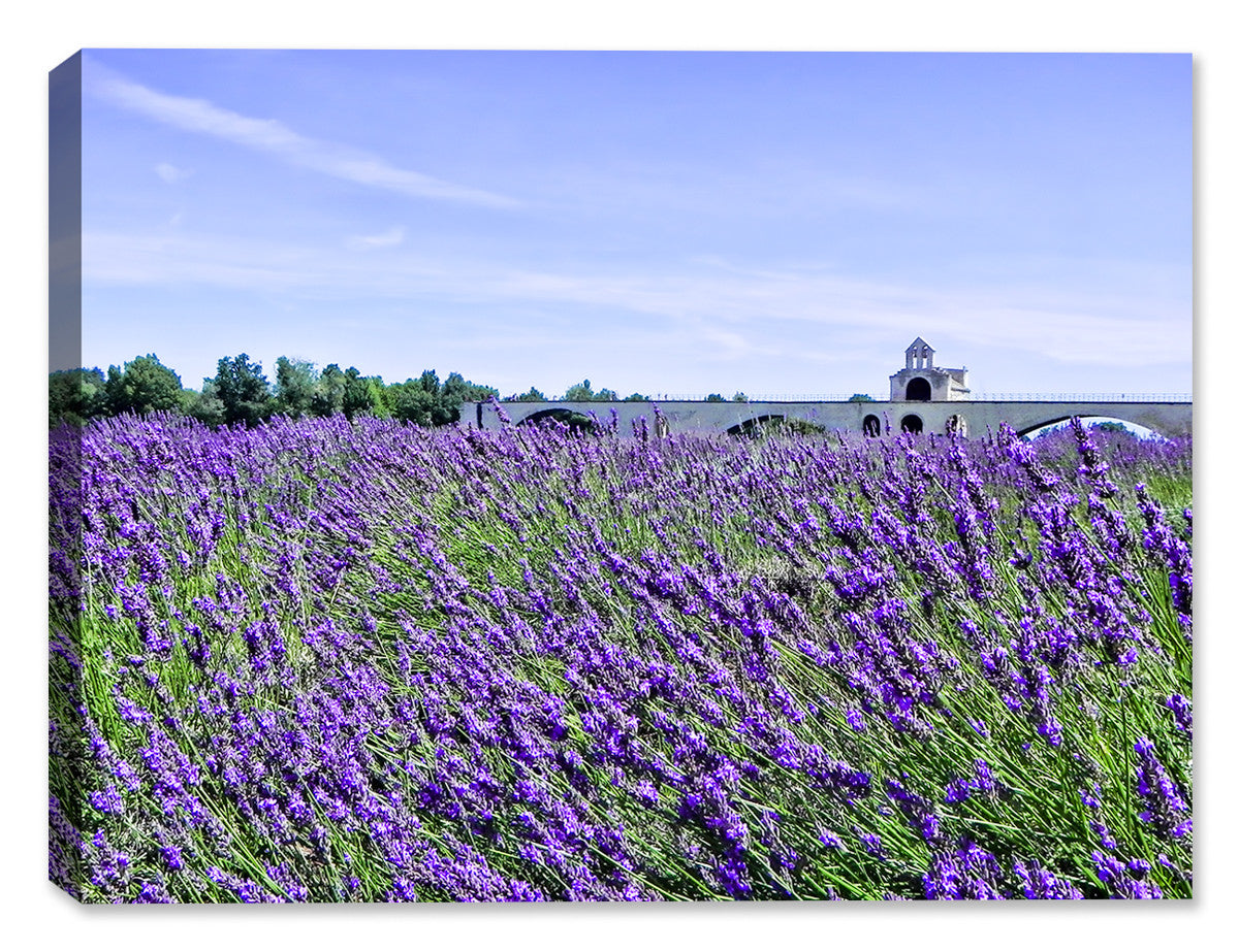 Avignon Lavender -  Indoor/Outdoor Art