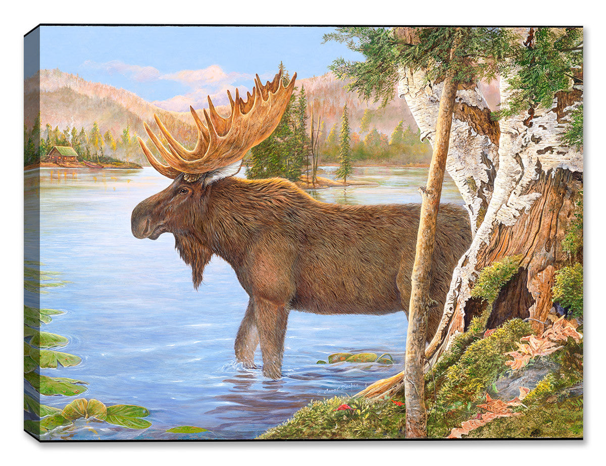 Majestic Moose by Carol Decker - Canvas Art Plus