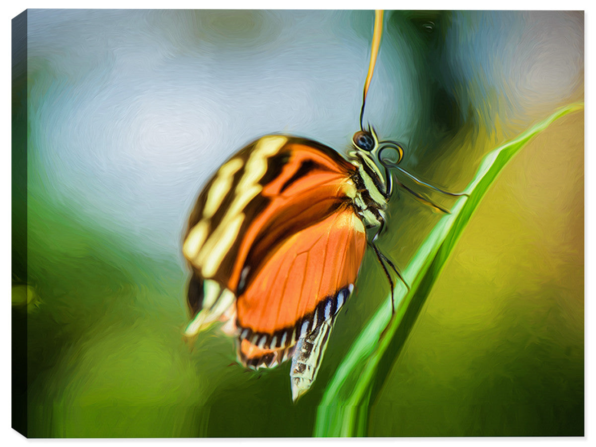 Monarch Butterfly  - Canvas Art Print - Canvas Art Plus