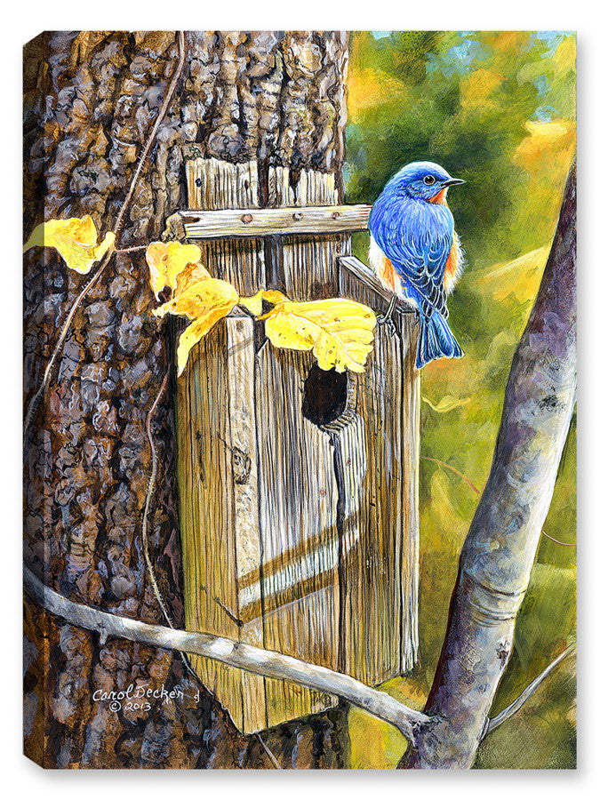 Old Homestead Bluebird - Canvas Art Plus