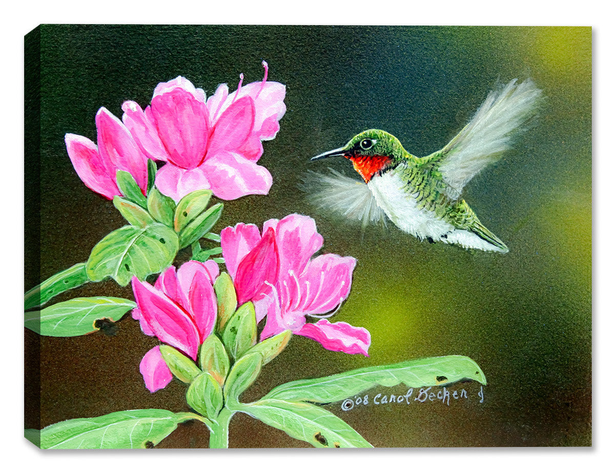 Opening Day - Hummingbird - Canvas Art Plus