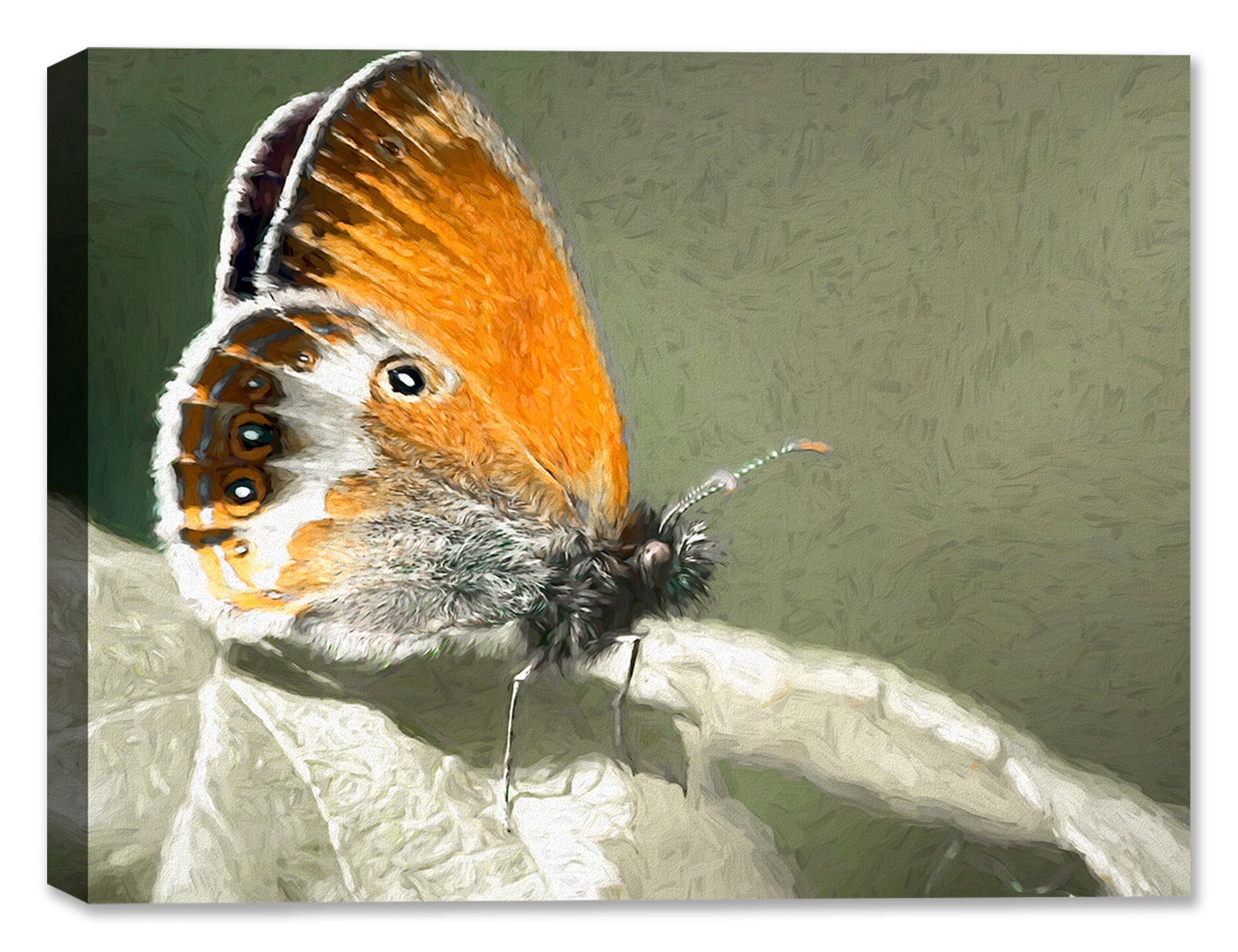 Butterfly #4 - Fine Art Canvas