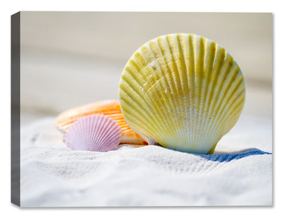 Sea Shells on the Beach - Canvas Art Print