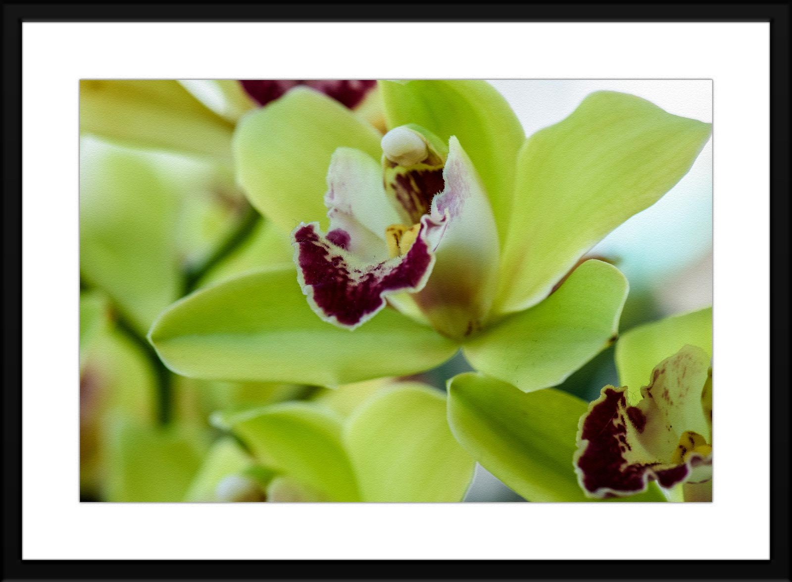 #54 Floral - Fine Art Photography