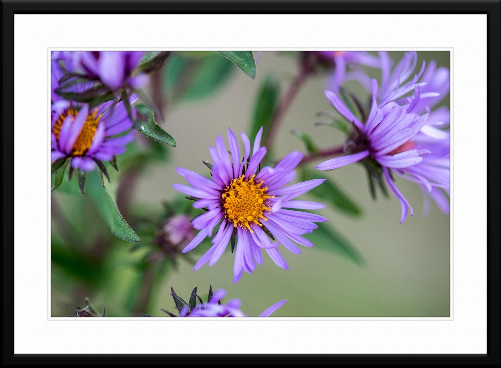 #65 - Fine Art Wildflower Macro Photography