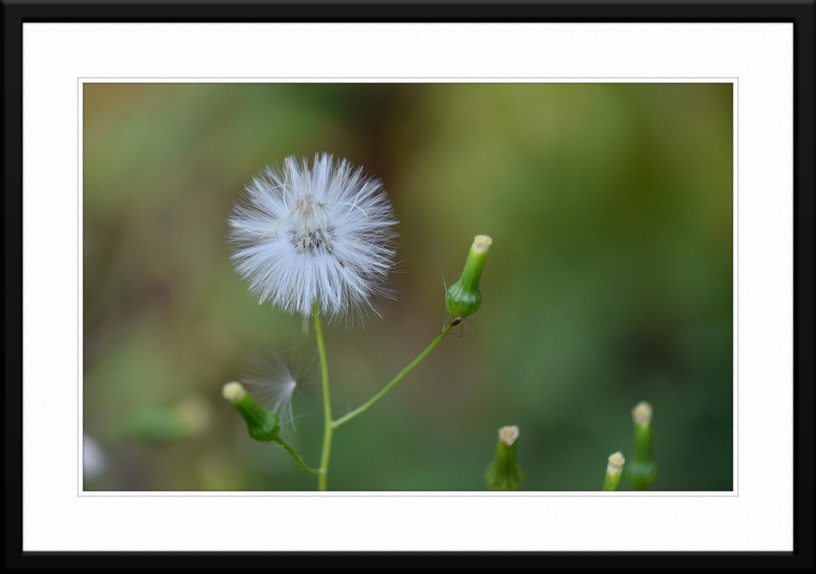 #64 - Fine Art Wildflower Macro Photography