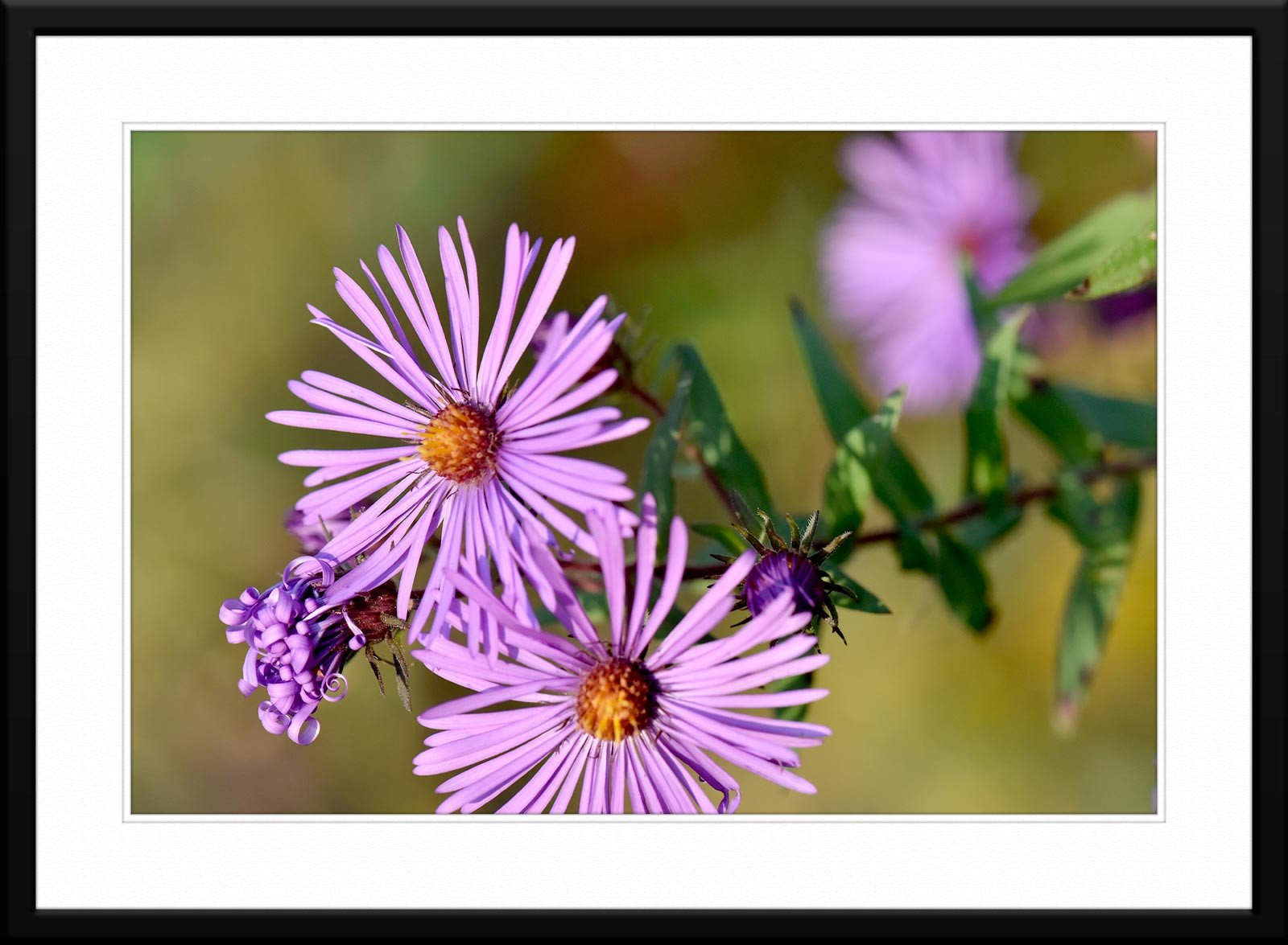 #60 - Fine Art Wild Flower Photography