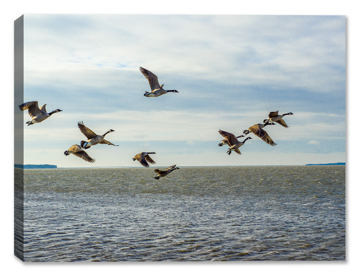 Flying Geese on the Ocean - Canvas Art Plus