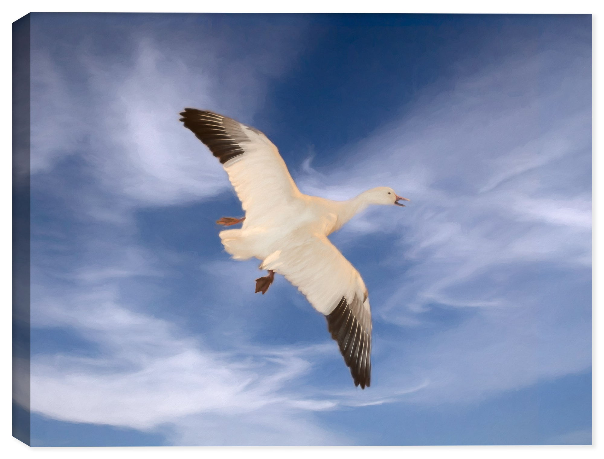 Adult Whit Morph - Bird in Flight on Canvas