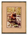 Busy Beaver - Photography by John Eveland - Framed Art
