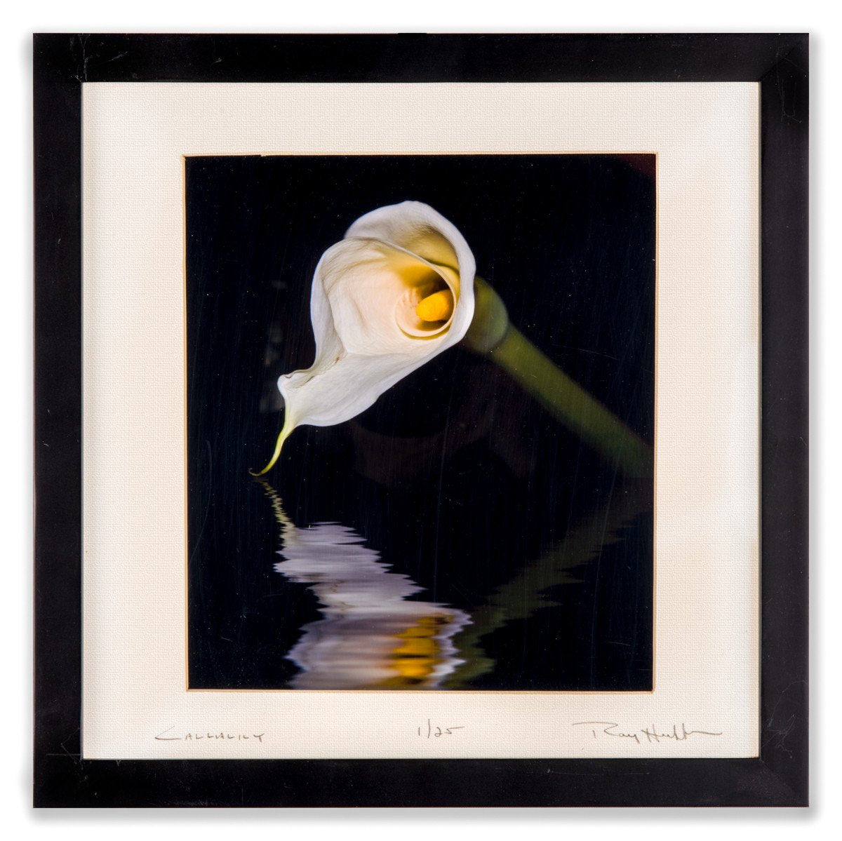 Calla Lily on Water - Photography by Ray Huffman - Framed Art - 1