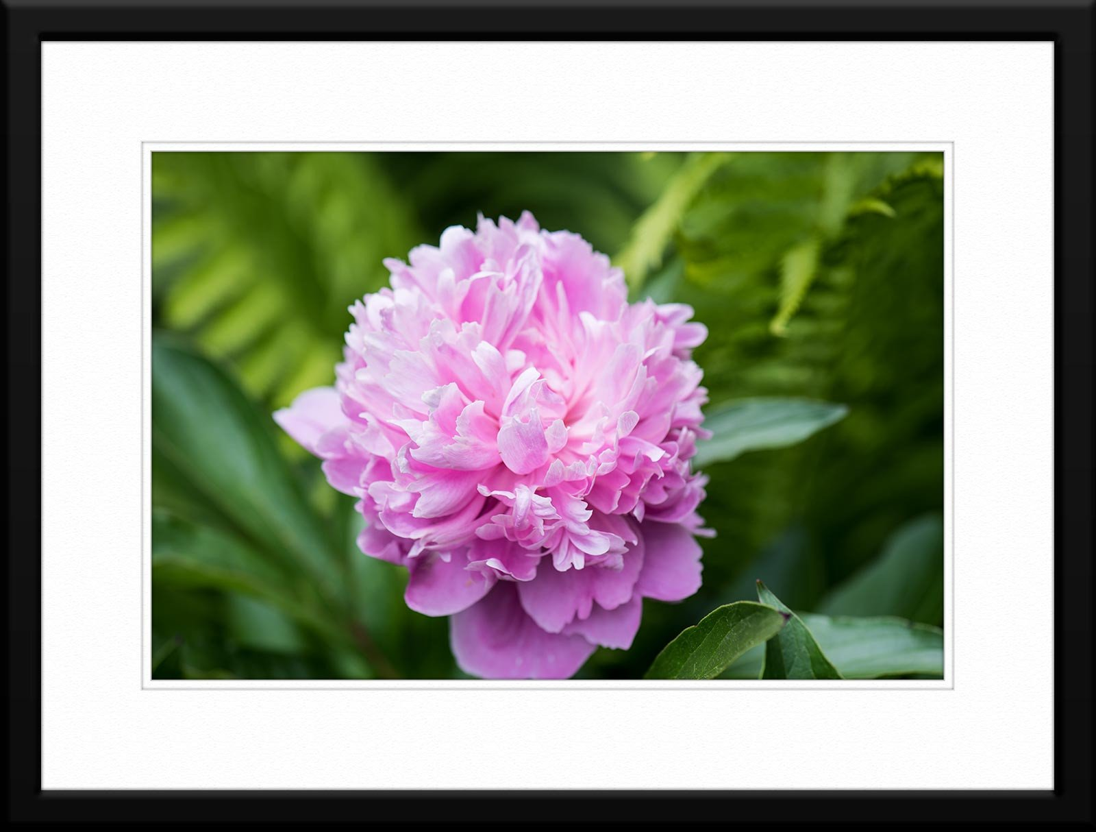 #52 Floral - Fine Art Photography