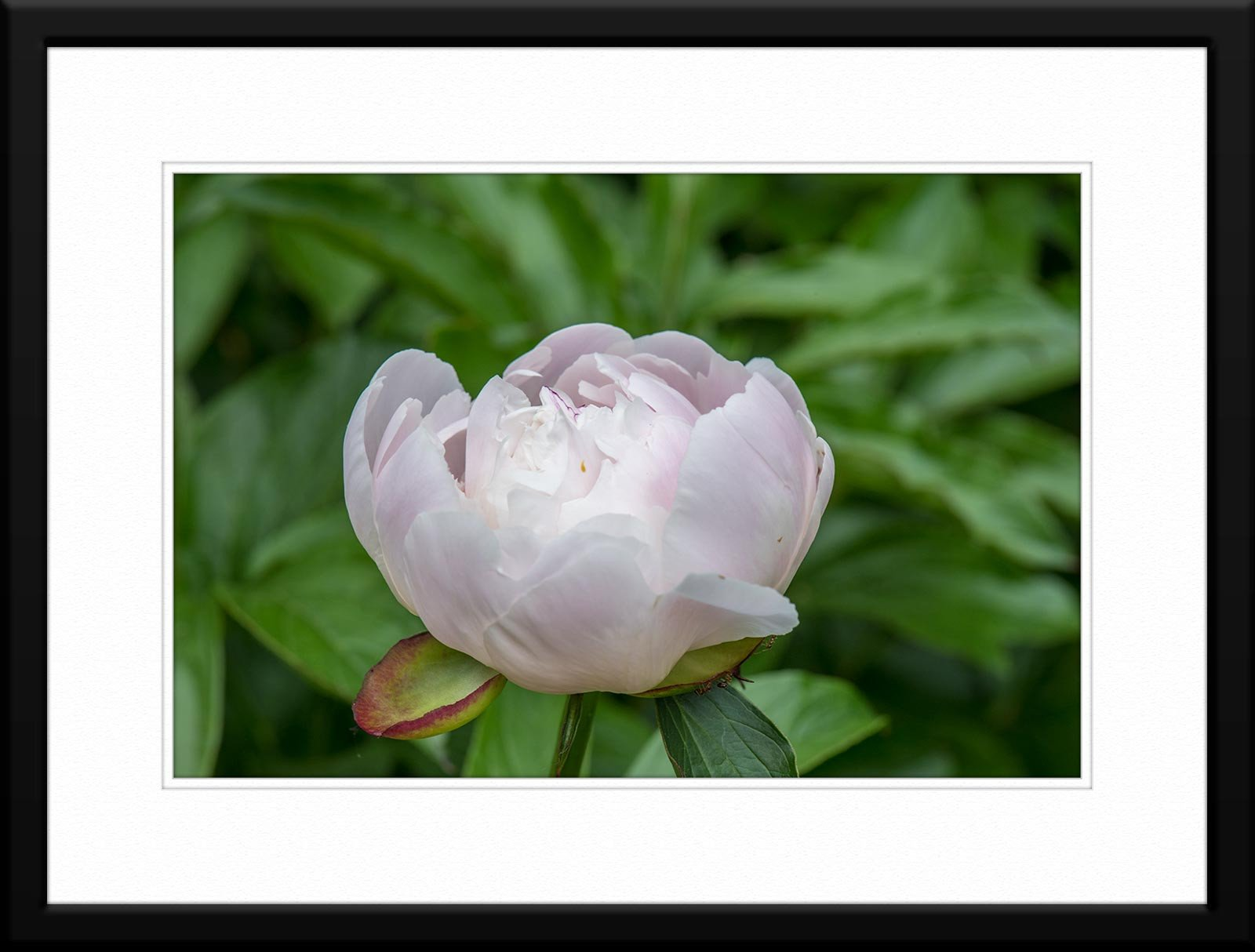 #51 Floral - Fine Art Photography