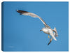 Soaring Seagull Photograph on Canvas