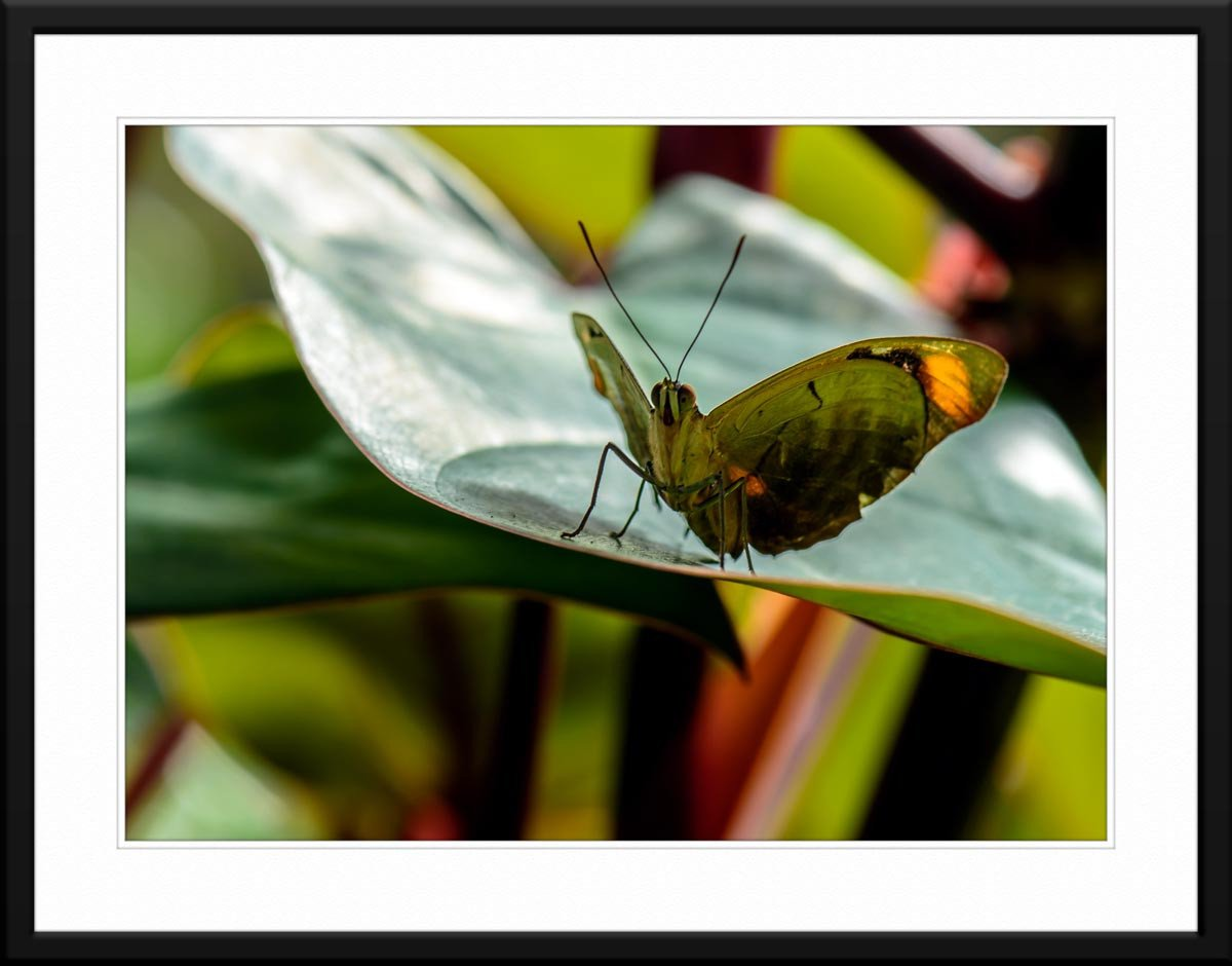 Butterfly & Orchid #1 - Fine Art Photography