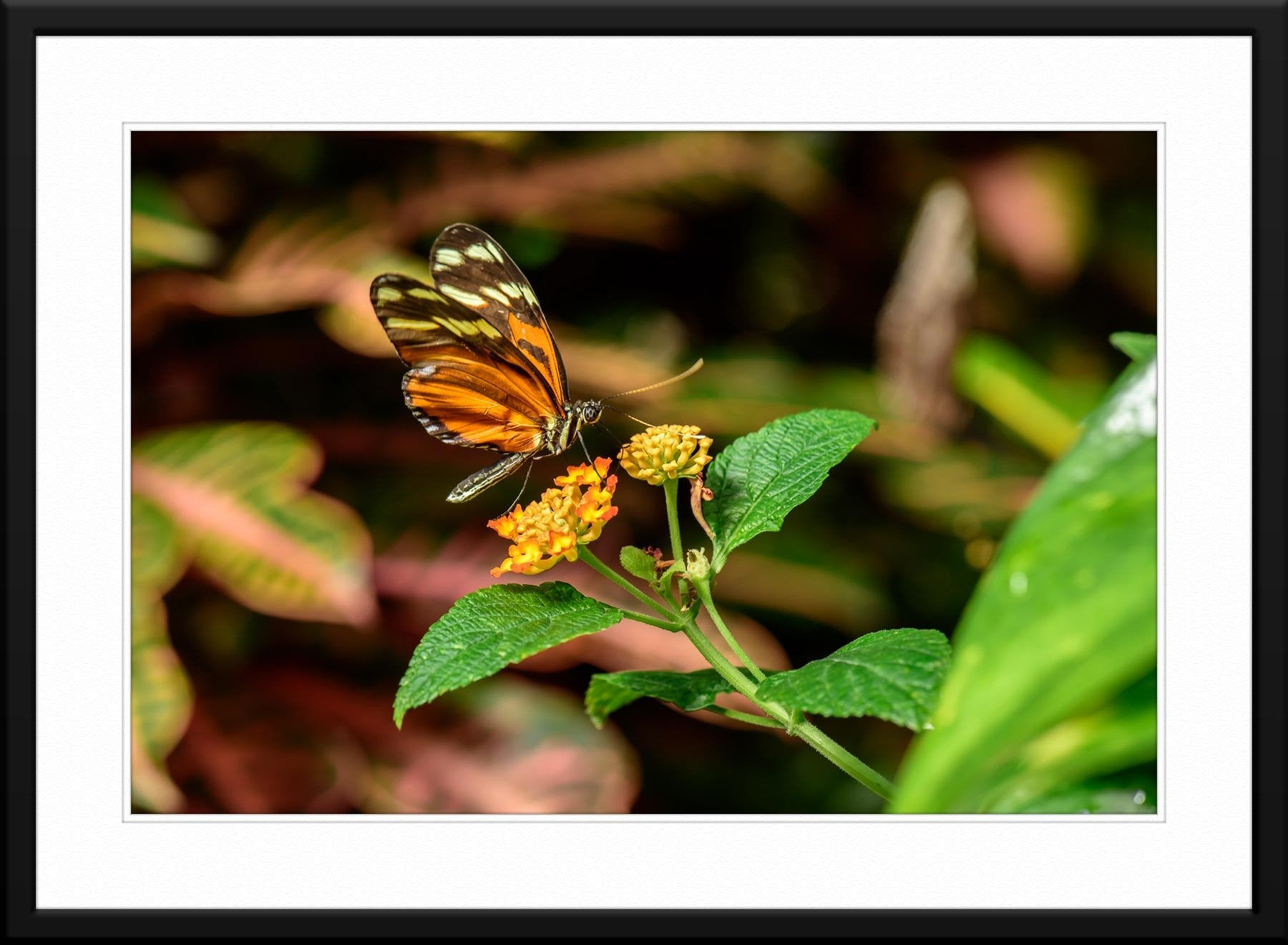 Butterfly #3 - Fine Art Photography