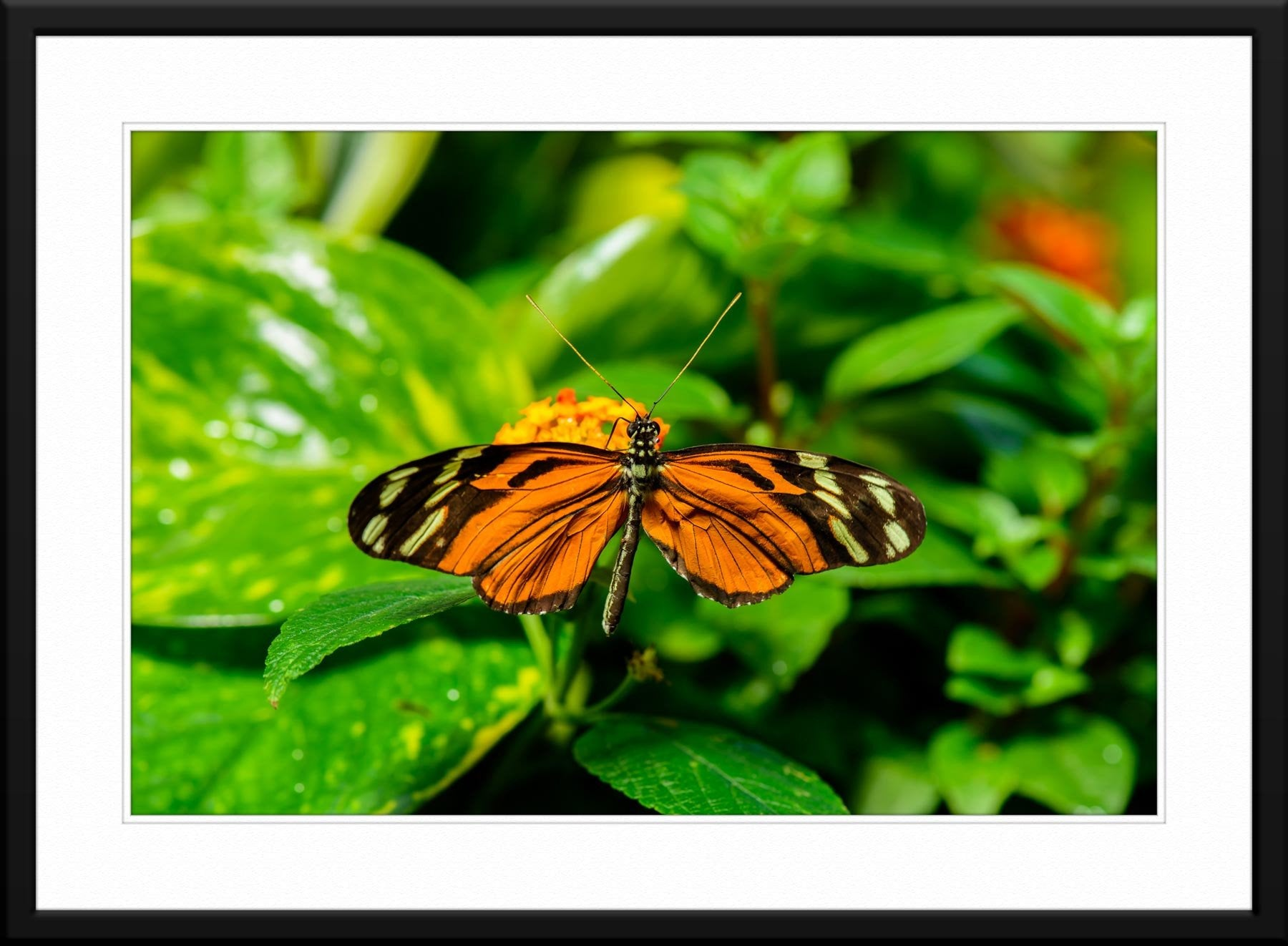 Butterfly #4 - Fine Art Photography