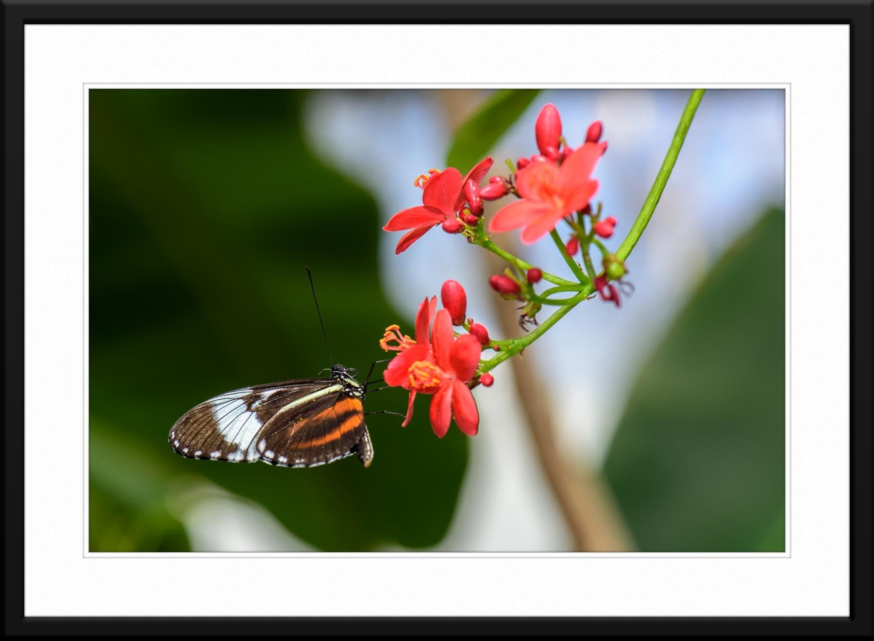 Butterfly #6 - Fine Art Photography