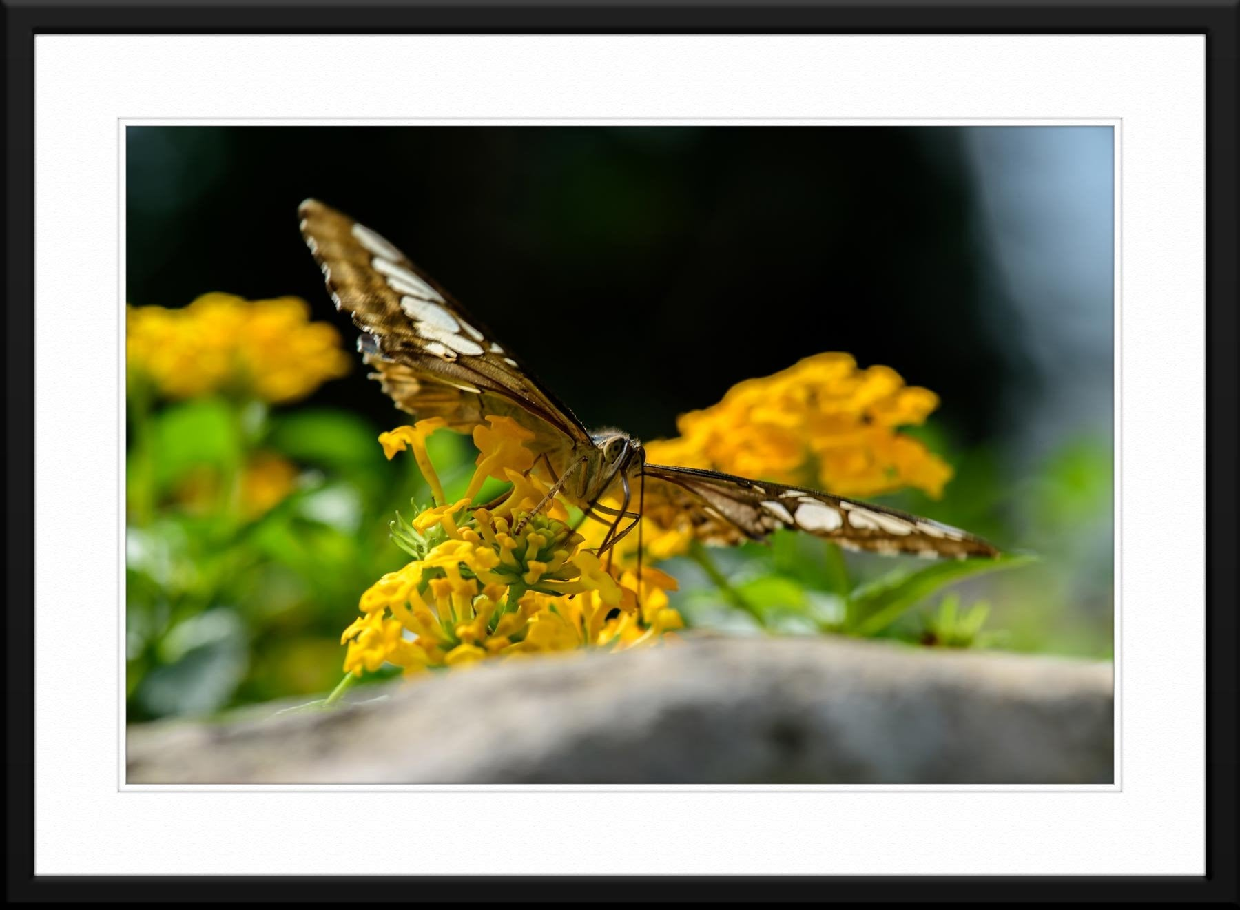Butterfly #7 - Fine Art Photography
