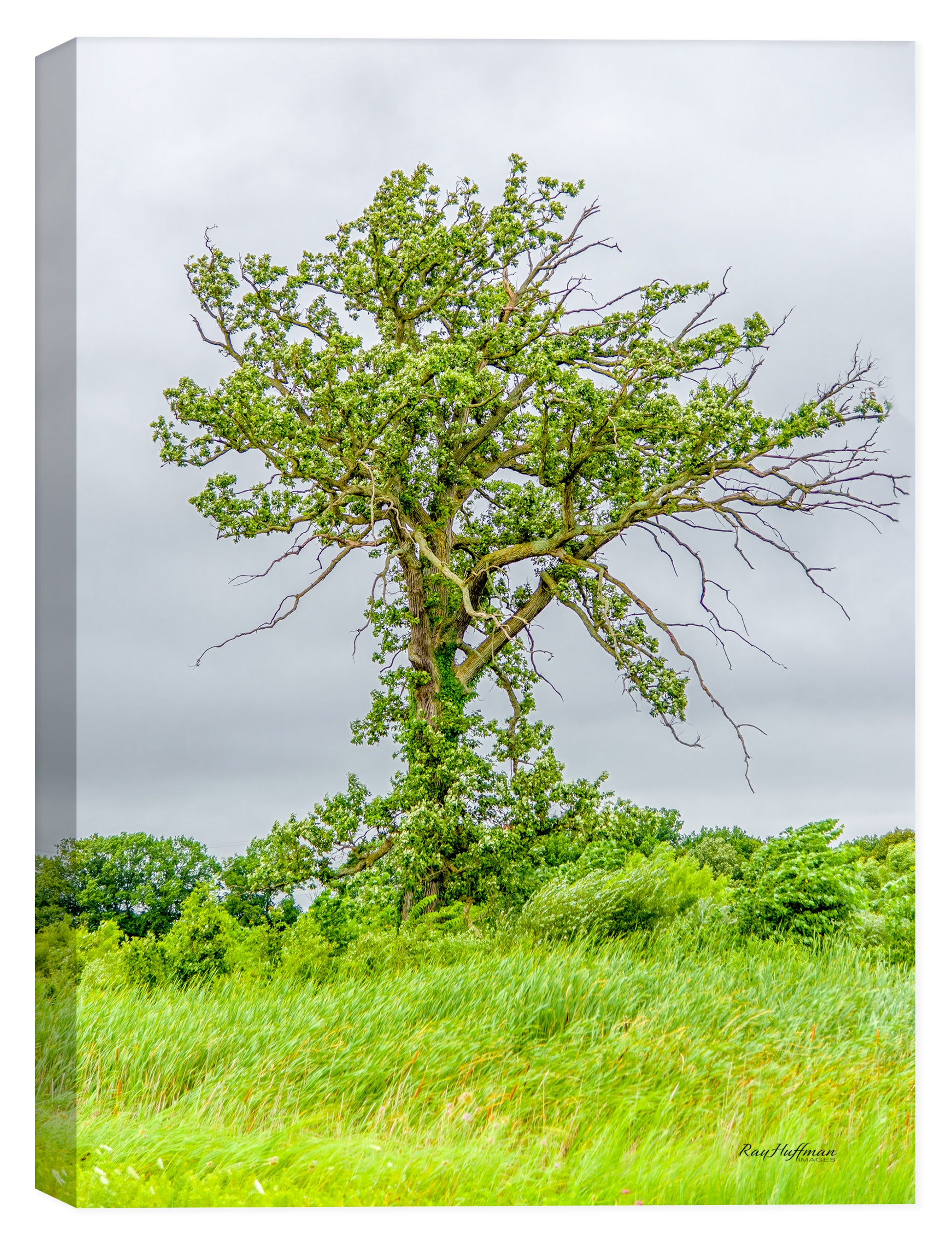 Tree & Grass - Photography by Ray Huffman on Canvas