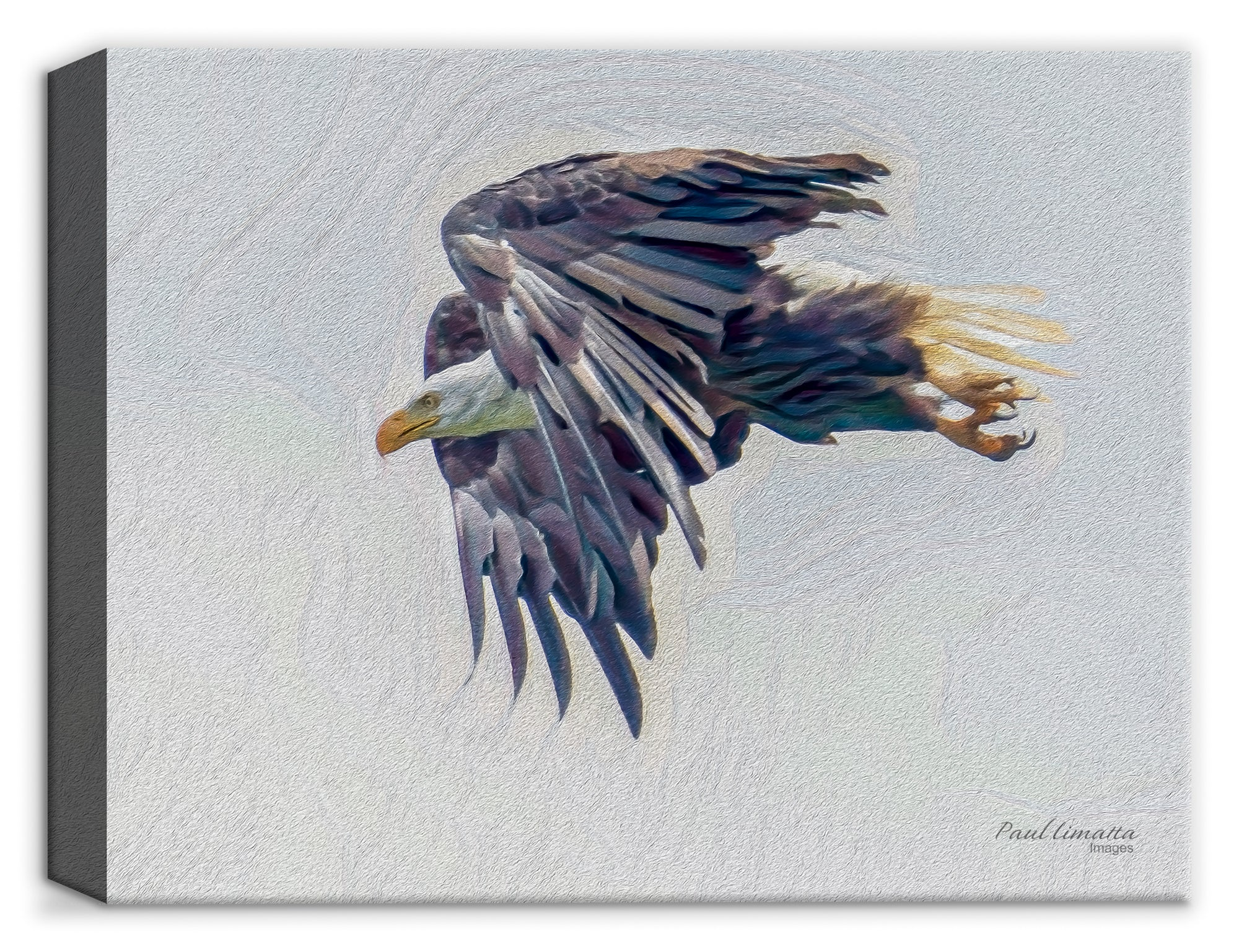 American Bald Eagle - by Paul Limatta