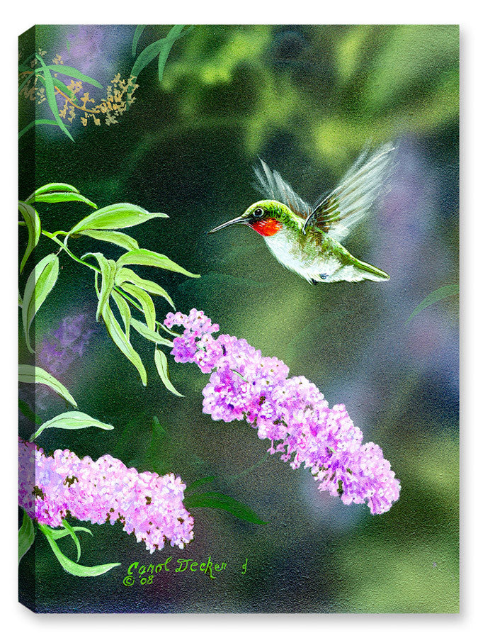 Summer Joy - Hummingbird - Canvas Art Plus