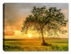 Sunset in the Country - Canvas Art Plus