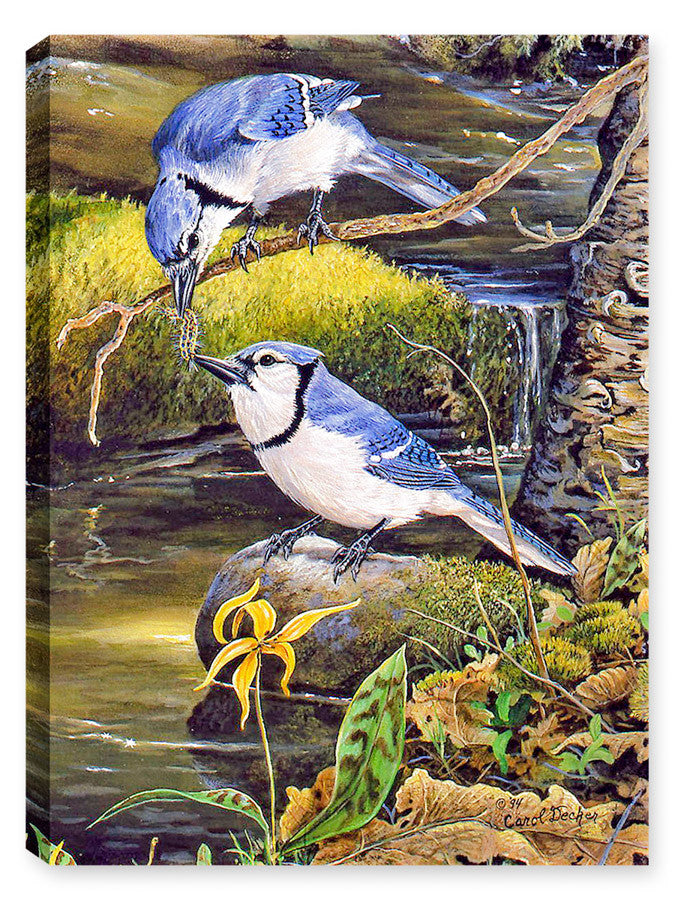 Tender Moments Bluejays - Canvas Art Plus