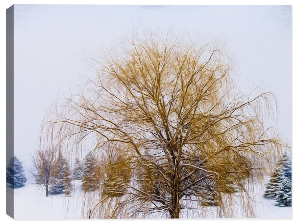 Weeping Willow in Winter  - Canvas Art Print - Canvas Art Plus