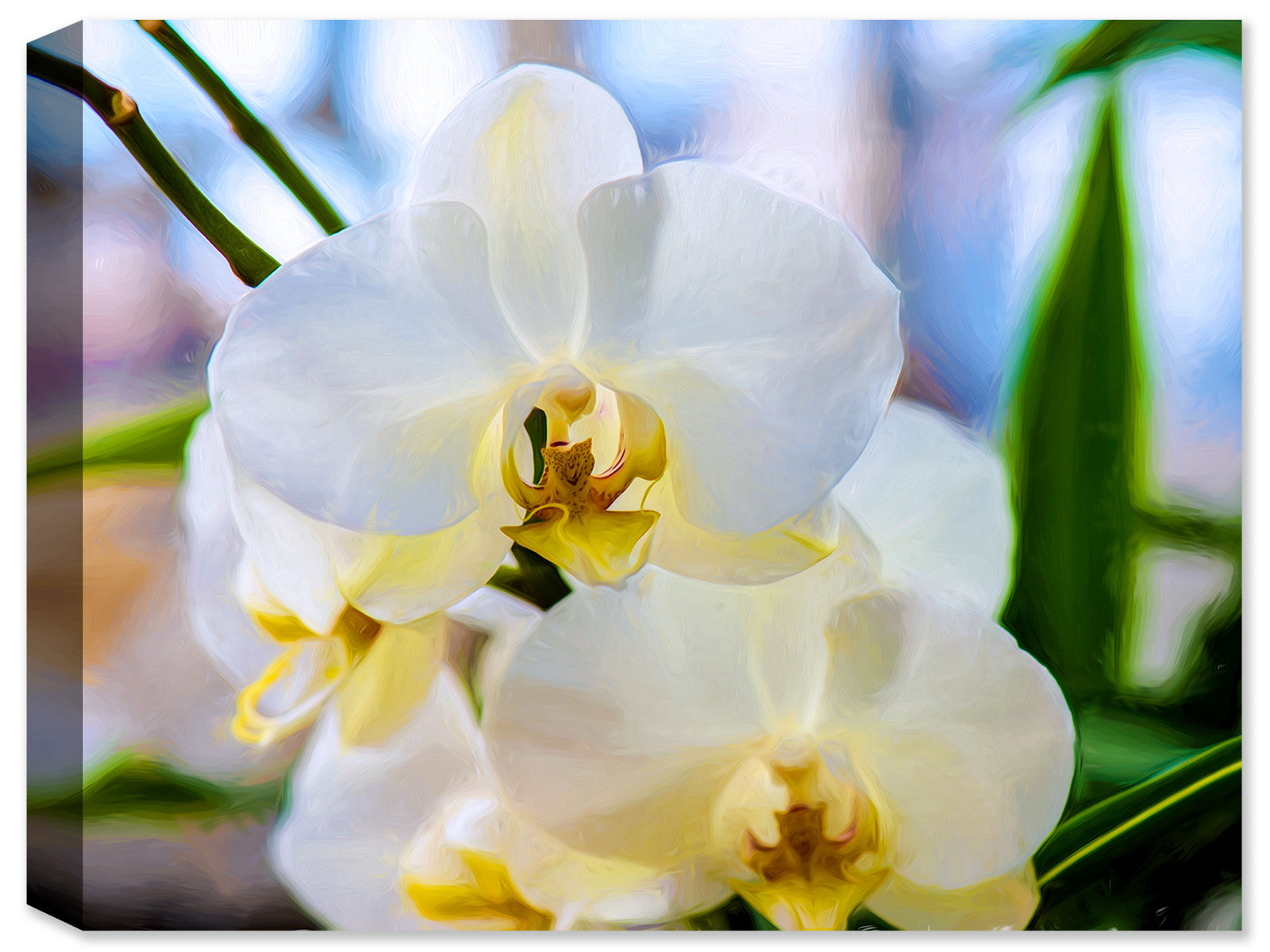 Heavenly White Orchids  - Fine Art Canvas Print - Canvas Art Plus
