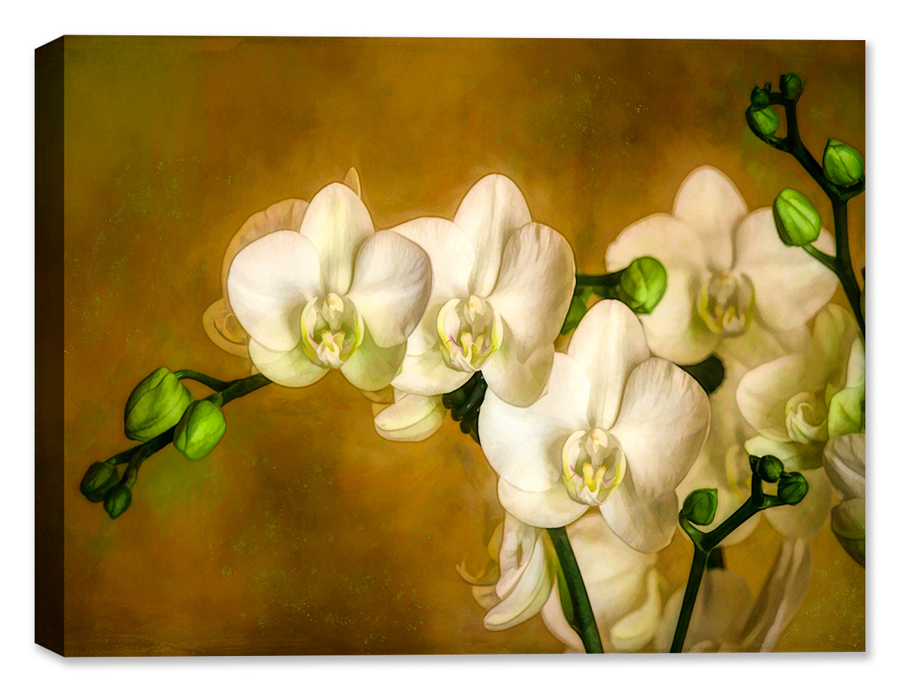 White Orchid - Canvas Art