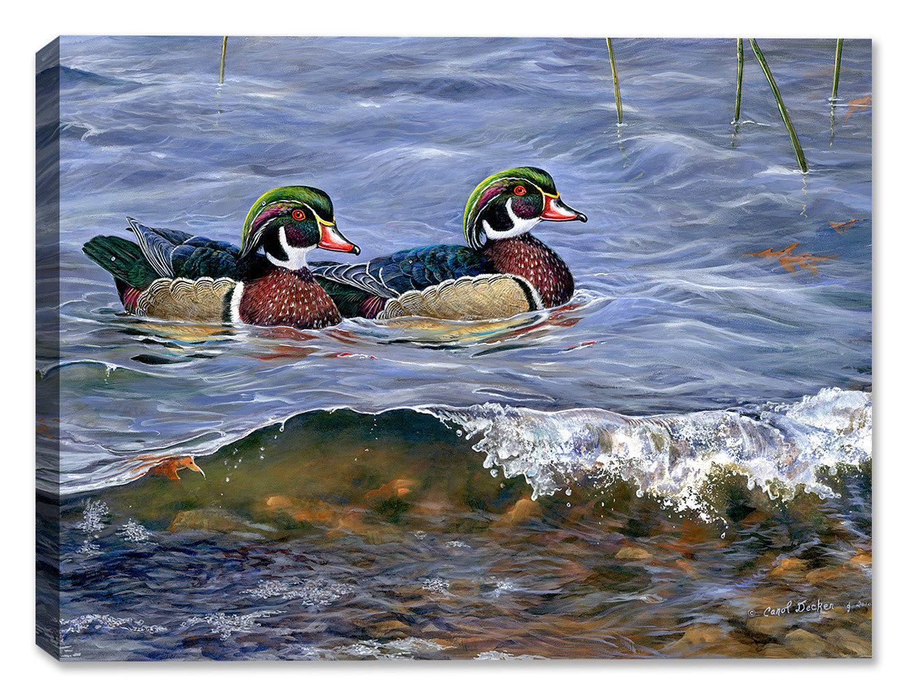 Wood Ducks  by Carol Decker - Canvas Art Plus