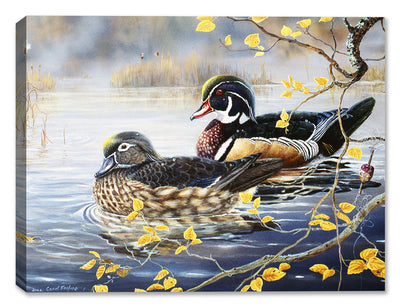 Wood Duck and Bobber by Carol Decker - Canvas Art Plus