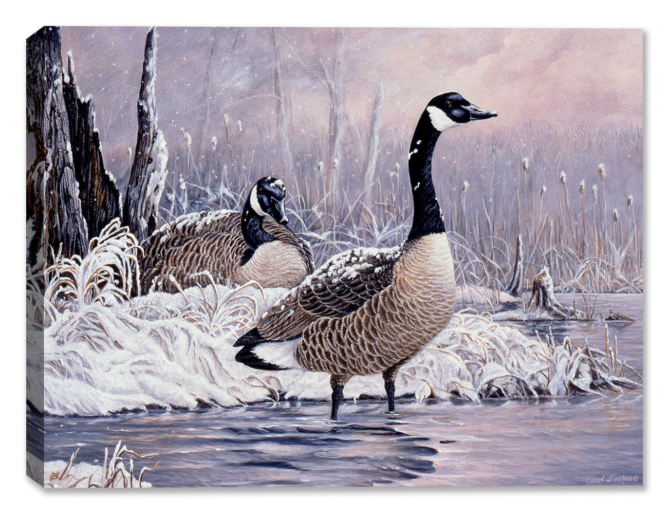 Cancelled Flight - Canadian Geese - by Carol Decker - Canvas Art Plus