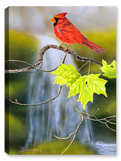 Cardinal near Waterfalls - Canvas Art Plus