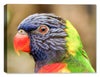 Beautiful Colorful Bird - Fine Art Canvas Print