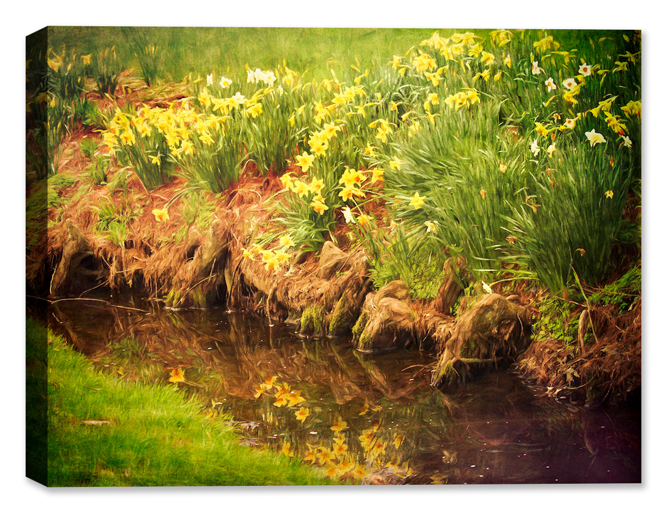 Daffodil Reflection - Canvas Art