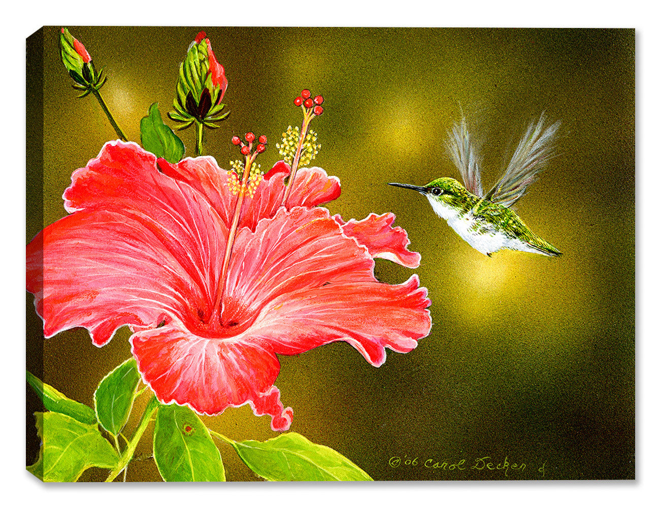 Hummingbird & Hibiscus - Painting by Carol Decker - Canvas Art Plus