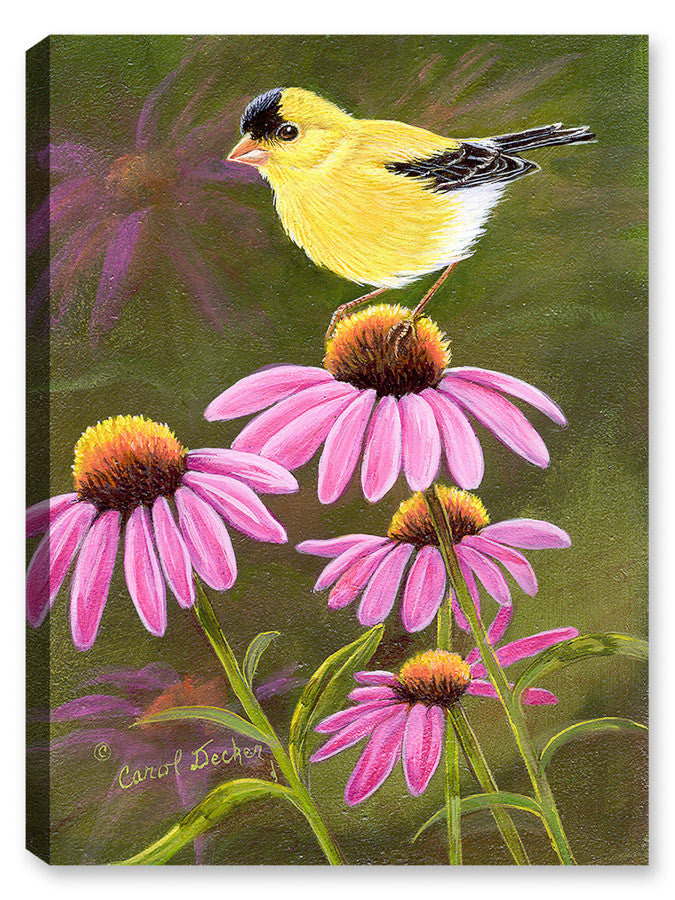 Goldfinch on Purple Coneflower - Canvas Art Plus
