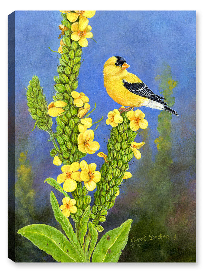 Goldfinch on Flowers - Canvas Art Plus