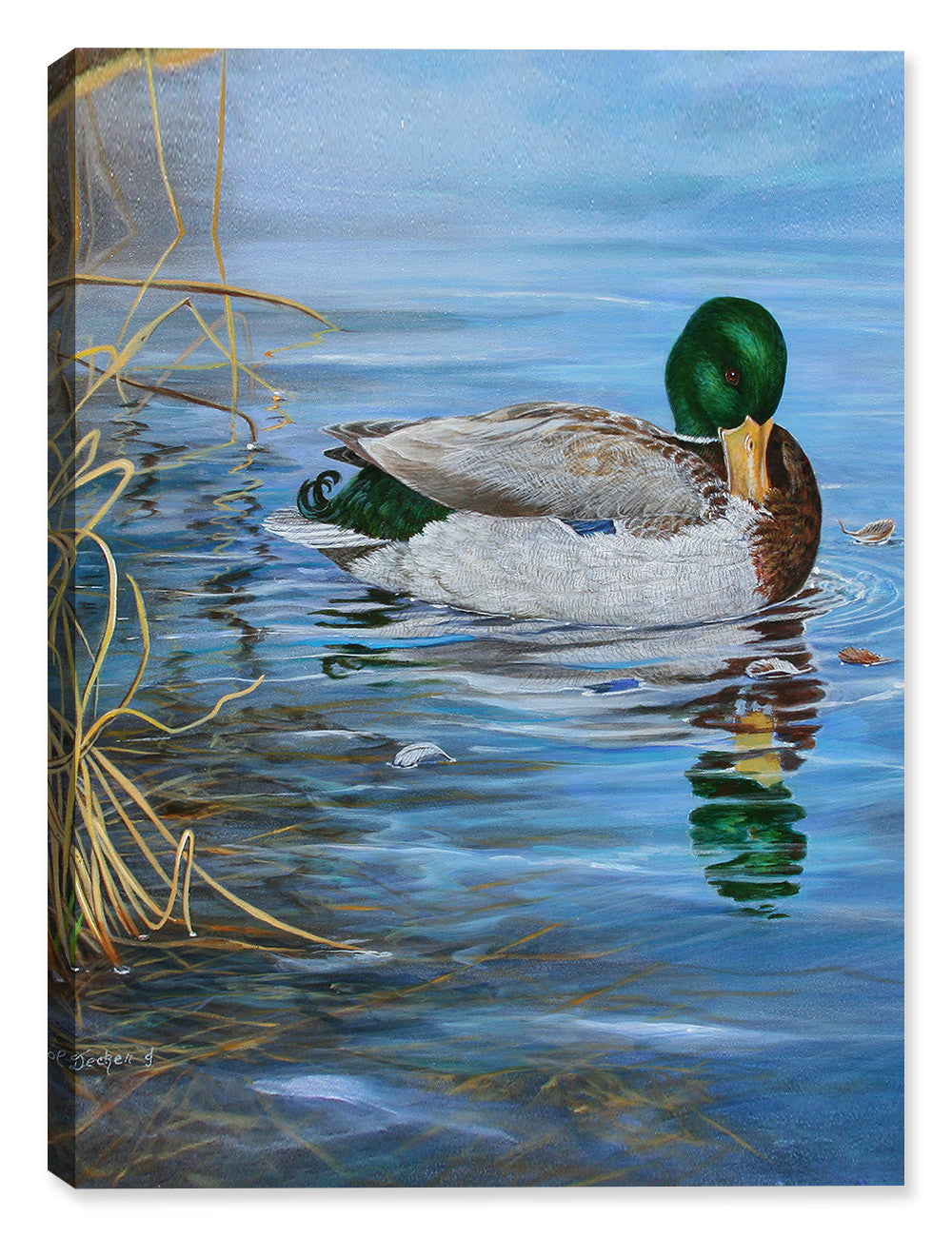 Grooming Mallard by Carol Decker - Canvas Art Plus